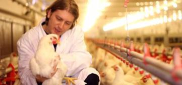 Verdere reductie antibioticagebruik bij landbouwhuisdieren